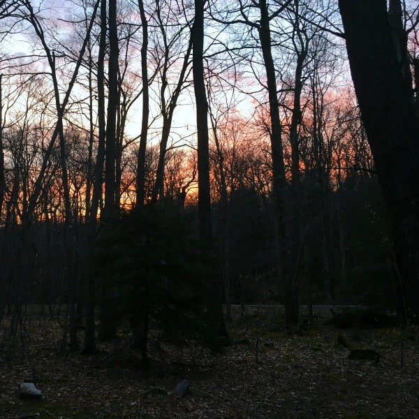 The sun setting through the trees at our free campsite in the Monongahela National Forest.
