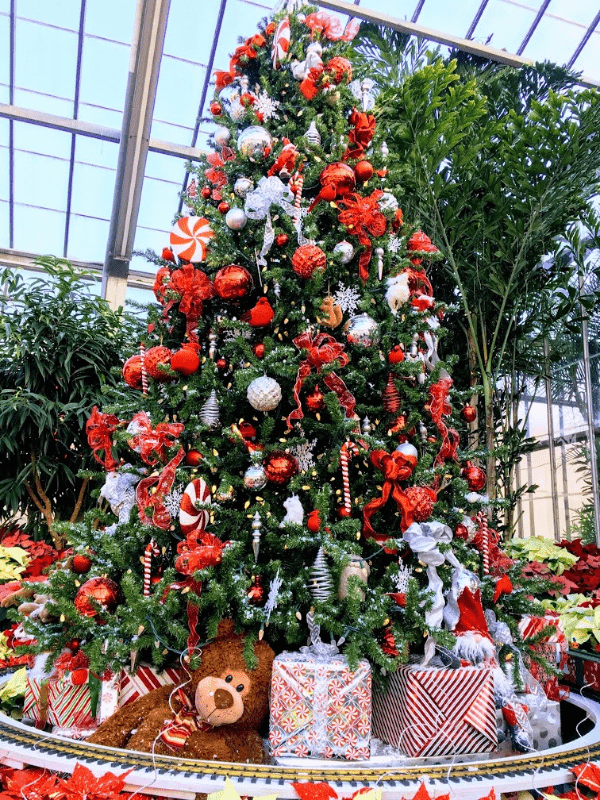 Enjoy a warm Indianapolis Christmas Event at Garfield Conservatory.