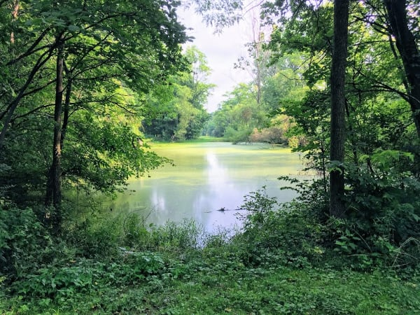 Pond just off the Moswa trail with a disc golf basket at the other end! Mississinewa, Indiana.