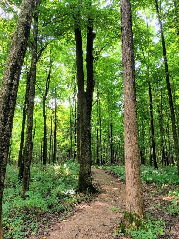 Wooded area on the Moswa hiking trail in Mississinewa Lake, Indiana.