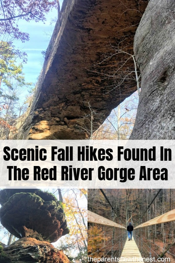 Scenic fall hikes found in the Red River Gorge Area of Kentucky. #hikes #Fallhikes