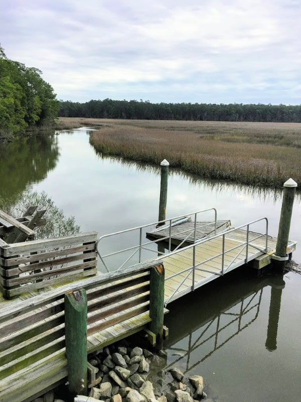 Places In Charleston, SC You Need To Explore: Francis Marion National Forest