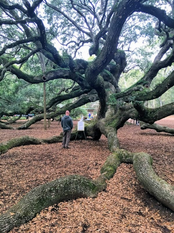 Places In Charleston, SC You Need To Explore: Angel Oak Tree