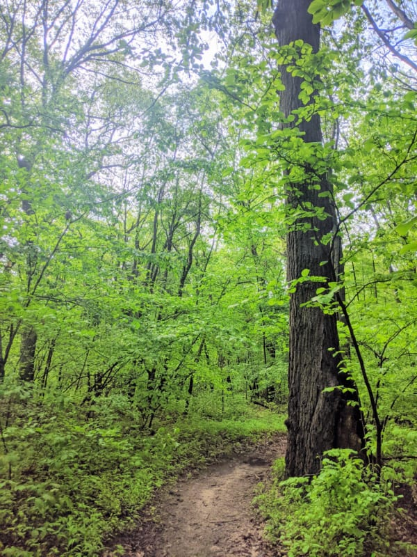 The beginning of one of many trails in Ruby Woods. Located in Michigan City, Indiana.