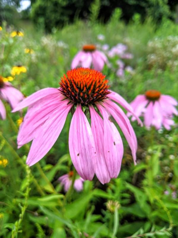 Flowers at Leila Arboretum.