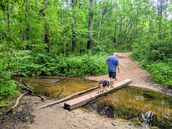 Crossing the creek on the blue trail in Fort Custer Recreation Area.
