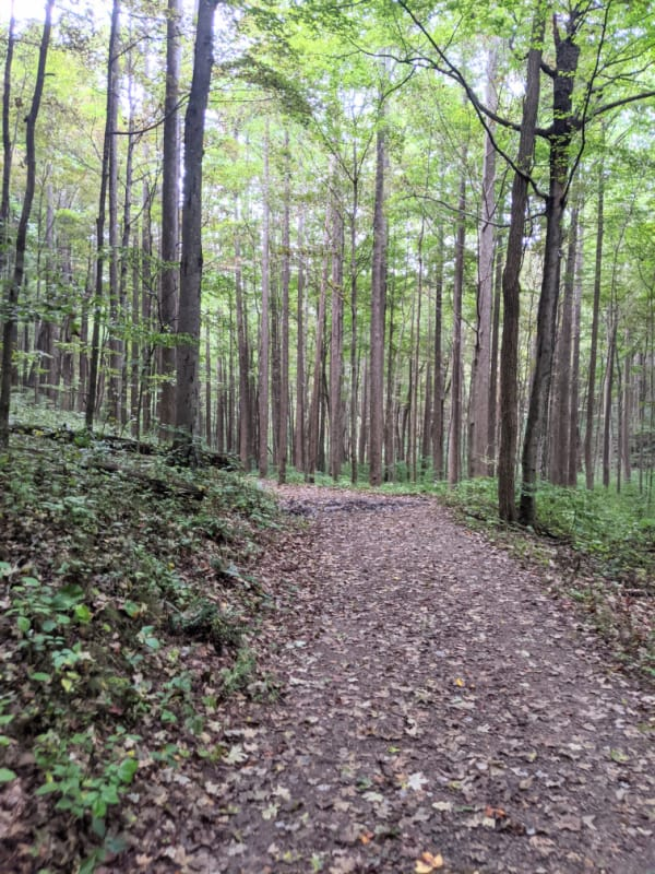 Blue Ridge Parkway Virginia Hikes: Road on the Rock Castle Gorge Loop Trail