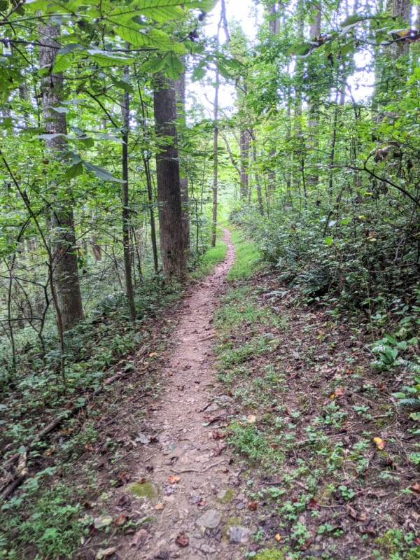 Blue Ridge Parkway Virginia Hikes: The beginning of the Smart View Loop Trail.