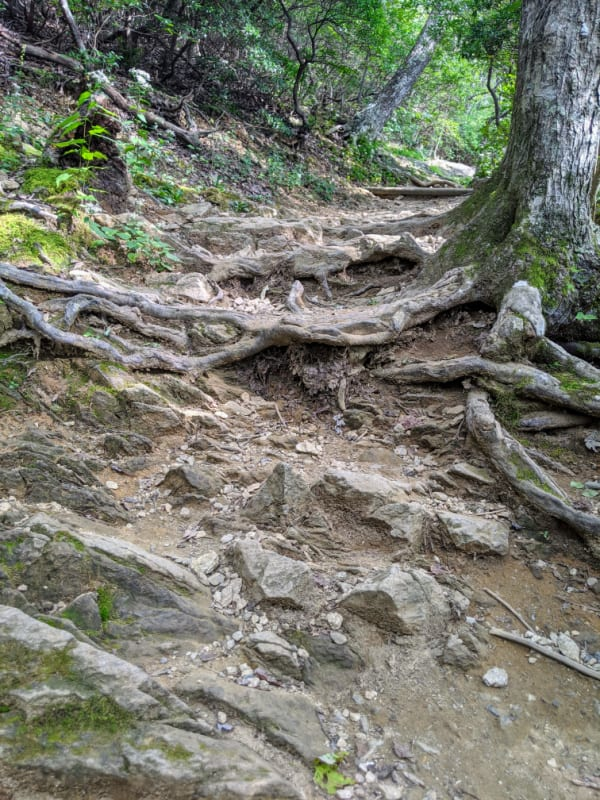 Blue Ridge Parkway Virginia Hikes: The Tough Climb Up The Sharp Top Trail